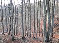 Buchenhochwald Elm.jpg