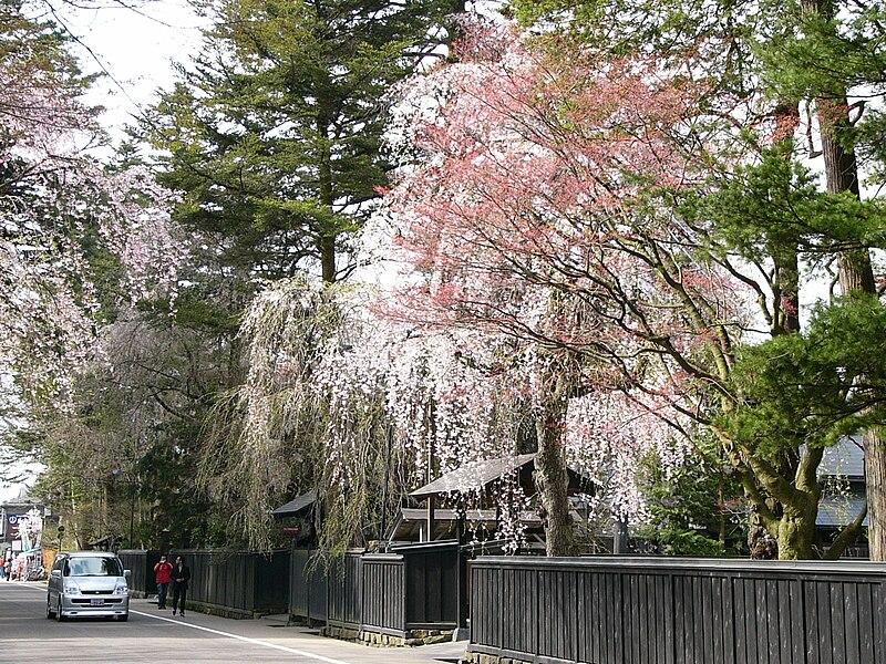 Kinh nghiệm du lịch Nhật Bản tự túc | mùa xuân nhật bản