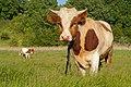Bull (Бычара) - panoramio.jpg