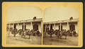 Burros packing wood, by Gurnsey, B. H. (Byron H.), 1833-1880.png