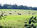 By Old Scotland Farm - geograph.org.uk - 974826.jpg