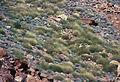 CSIRO ScienceImage 1770 Australian Landscape.jpg
