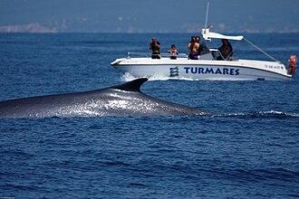 Tarifa - Watching fin whales off Tarifa.