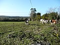 Calves in the sunshine - geograph.org.uk - 705854.jpg