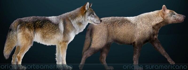 Extinct Wolf Breeds - wolf info