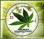 Cannabis sativa. Stamp of Macedonia.jpg