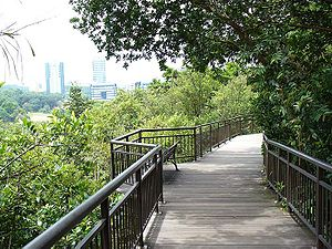 Kent Ridge Park - A section of the 280-metre long canopy walk in Kent Ridge Park