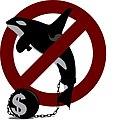 Captiva orca cetacean in zoological park dolphinarium animal rights 02.jpg