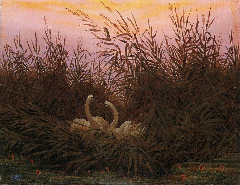 File:Caspar David Friedrich - Schwäne im Schilf beim ersten Morgenrot.jpg