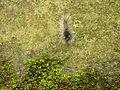 Caterpillar - Champasak - Laos.JPG