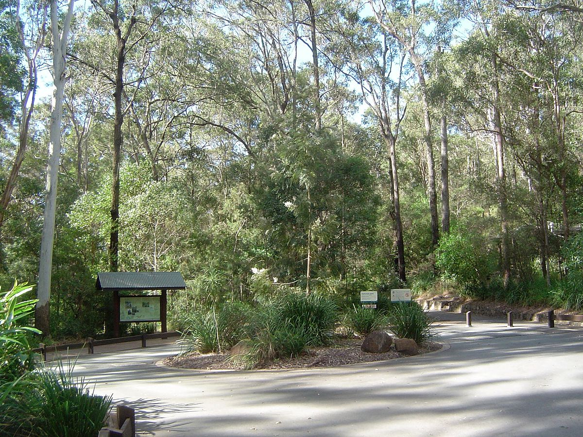 Gold coast hinterland wikipedia for Cedar creek