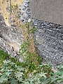 Cemitério Judaico do Funchal, Funchal, Madeira - IMG 8685.jpg