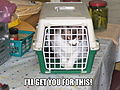Charlie - lolcat caged.jpg