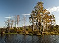 Charlton County, GA, USA - panoramio (2).jpg