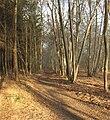 Chaussée Brunehaut - Forêt de Chantilly - parc188-189.jpg