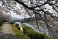 Cherry blossom @ Kyoto - panoramio (1).jpg