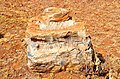 Chert and stromatolite-rich dolomite rock (Pelindaba Rock).jpg