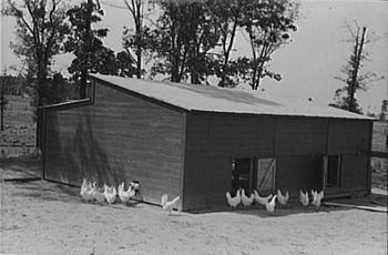 Chicken coop, Sabine Farms, Marshall, Texas