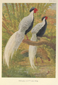 Chinese Silver Kaleege by Charles Knight.png