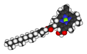 Magnesium in biology - Space-filling model of the chlorophyll a molecule, with the Magnesium ion (bright-green) visible at the center of the porphyrin group