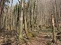 Chodník na Katovu skalu - panoramio.jpg