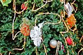 Christmas stuffs on the huge Christmas tree - panoramio.jpg