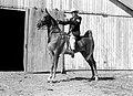 Civil Defense horse (MSA) (24031700265).jpg