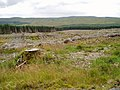 Clear Fell in Smittons Forest. - geograph.org.uk - 524501.jpg