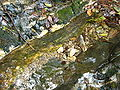 Clear Water of Lushan 01.JPG