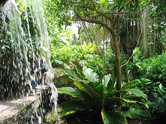 Cleveland Botanical Garden - The Costa Rican rainforest as replicated in The Eleanor Armstrong Smith Glasshouse at the Cleveland Botanical Garden