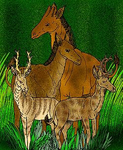 古長頸鹿與Climacoceras的比較