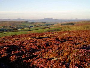 Pennines - Scenery in the Forest of Bowland