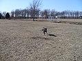 Coldwater Dog Park - panoramio.jpg