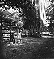 Collectie NMvWereldculturen, TM-20000842, Negatief, 'Dessa Pakem tussen Yogyakarta en Kaliurang', fotograaf Boy Lawson, 1971.jpg