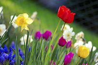 202px Colorful spring garden Happy First Day of Spring!