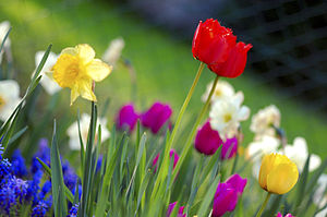 Spring (season) - Colorful spring garden flowers