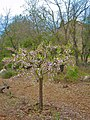 Començament de la Primavera a l'Alt Urgell - panoramio.jpg
