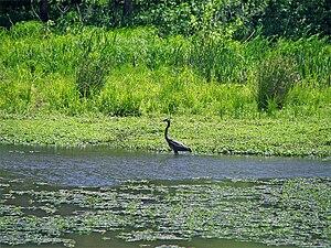 Lake Conestee Nature Park - Image: Conestee crane
