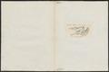 Conger vulgaris - 1700-1880 - Print - Iconographia Zoologica - Special Collections University of Amsterdam - UBA01 IZ15200014.tif