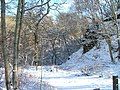 Conon Wood Nature Reserve - geograph.org.uk - 131281.jpg