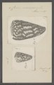 Conus marmoreus - - Print - Iconographia Zoologica - Special Collections University of Amsterdam - UBAINV0274 086 01 0007.tif
