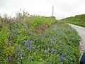 Cornish roadside late spring flowers - geograph.org.uk - 1311013.jpg