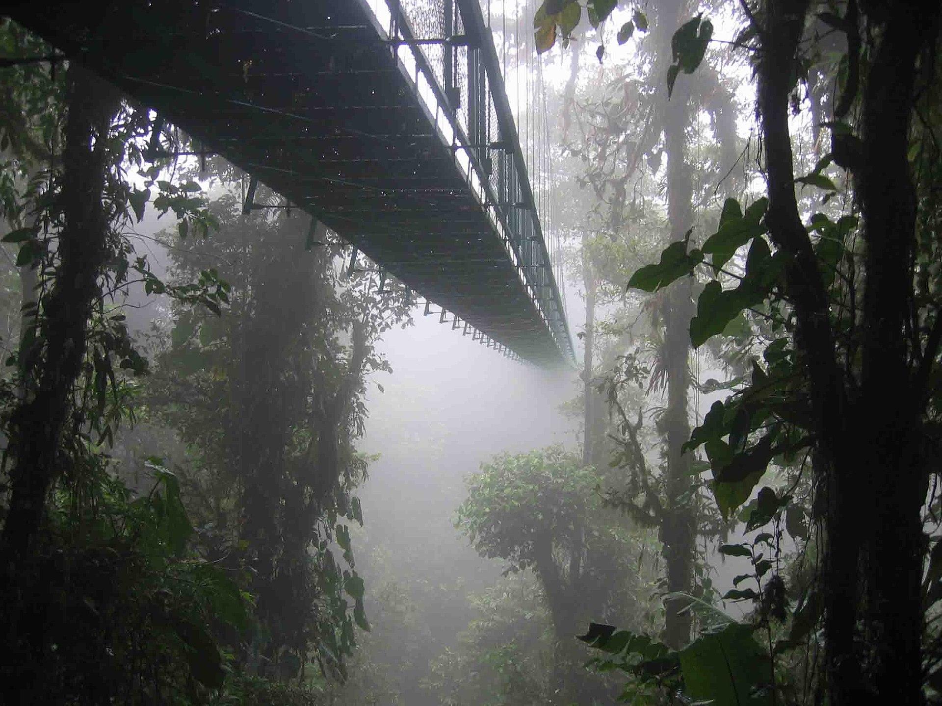 コスタリカのモンテベルデ雲霧林