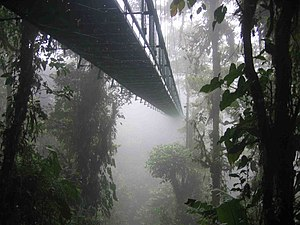 Cloud forest - One of the hanging bridges of the Sky walk at the Monteverde Cloud Forest Reserve in Monteverde, Costa Rica disappearing into the clouds