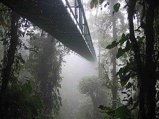 Canopy walkway Elevated walkway