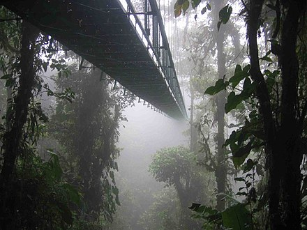 Canopy walkway in the cloud forest in Santa Elena, Costa Rica Costa rica santa elena skywalk.jpg