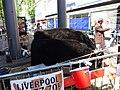 Cows, Liverpool Blitz 70 event - DSCF0083.JPG