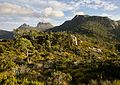 Cradle Mountain with foreground vegetation, Tas.jpg