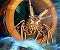 Crayfish hunstanton.jpg