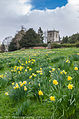 Crayke Daffodils (13361743645).jpg